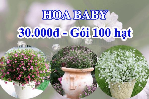 3 loại hạt giống hoa baby cửa hàng hạt giống mỹ Đình