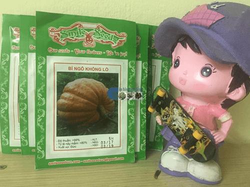 Túi hạt giống bí ngô khổng lồ - Cửa hàng hạt giống Mỹ Đình