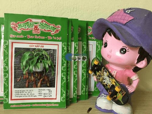 Gói hạt giống cây nắp ấm