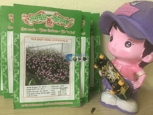 Túi hạt giống hoa baby hồng - Cửa hàng hạt giống Mỹ Đình