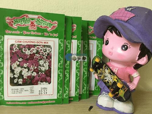 Vỏ gói hạt giống cẩm chướng đơn mix - Cửa hàng hạt giống Mỹ Đình