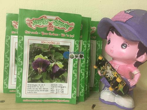 Vỏ gói hạt giống hoa cẩm chuông leo - Cửa hàng hạt giống Mỹ Đình