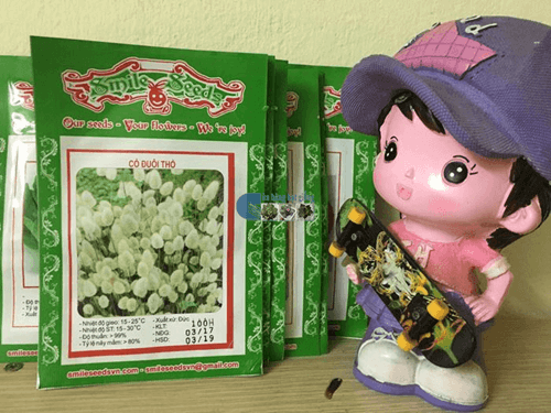 Túi hạt giống cỏ đuôi thỏ - Cửa hàng hạt giống Mỹ Đình