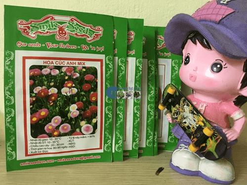 Túi hạt giống hoa cúc anh Mix - Cửa hàng hạt giống Mỹ Đình