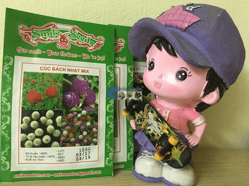 Túi hạt giống hoa cúc bách nhật Mix - Cửa hàng hạt giống Mỹ Đình