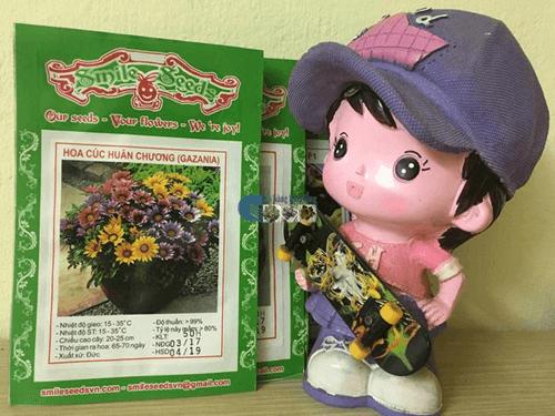 Vỏ gói hạt giống hoa cúc huân chương mix - Cửa hàng hạt giống Mỹ Đình