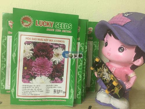 Bao bì gói hạt giống hoa sao nháy mix-Cửa hàng hạt giống Mỹ Đình