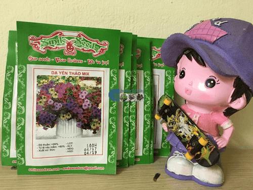 Gói hạt giống Dạ yến thảo mix - Cửa hàng hạt giống Mỹ Đình
