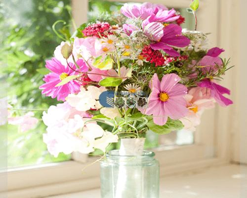 Cửa hàng bán hạt giống hoa sao nháy mix