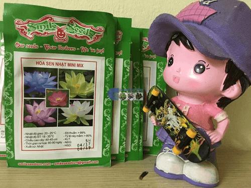 Mẫu gói sen mini 5 màu tại Cửa hàng hạt giống Mỹ Đình