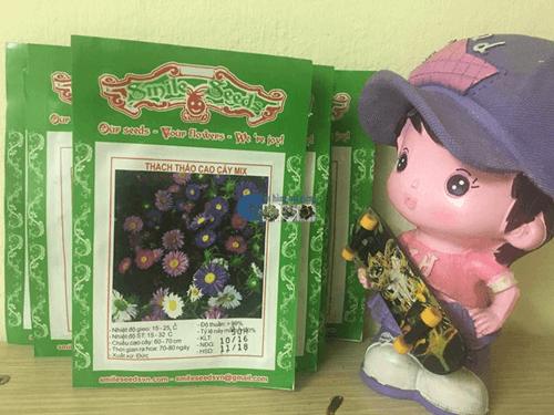 Túi hạt giống hoa thạch thảo cao mix