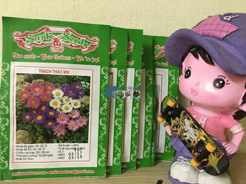 Túi hạt giống hoa thạch thảo lùn mix
