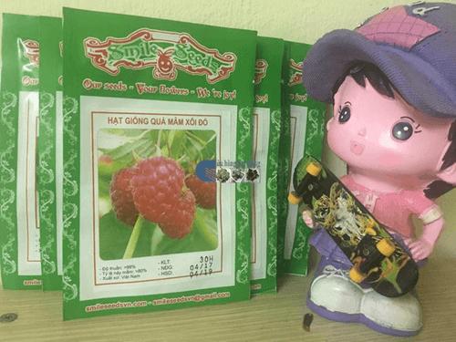 Túi hạt giống quả mâm xôi đỏ Cửa hàng hạt giống Mỹ Đình