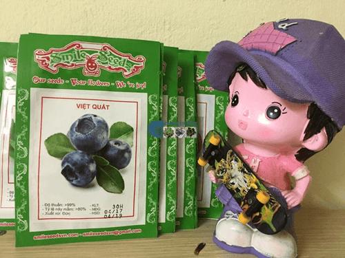 Túi hạt giống quả việt quất - Cửa hàng hạt giống Mỹ Đình