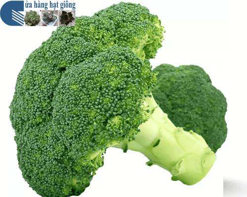 Bán hạt giống Súp lơ xanh chất lượng