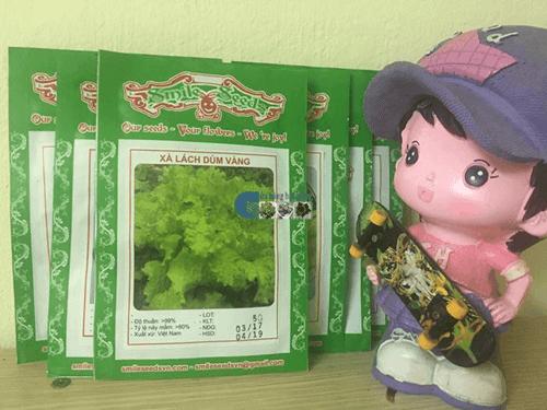 Túi hạt giống xà lách dúm vàng - Cửa hàng hạt giống Mỹ Đình