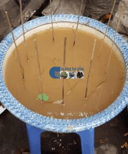 Cách trồng sen mini nhật 8 màu từ hạt