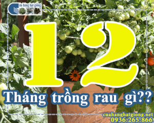 Tháng 12 trồng rau gì