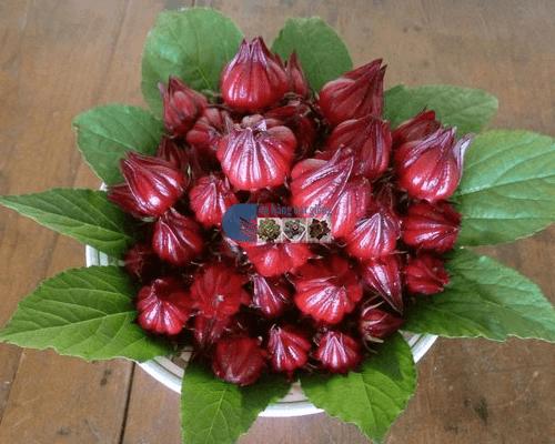 Cách ngâm hoa atiso đỏ với đường làm đồ uống cực hấp dẫn
