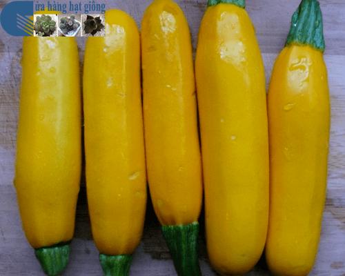Cửa hàng bán hạt giống bí ngồi vàng