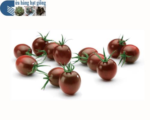 Cửa hàng Bán hạt giống cà chua bi socola