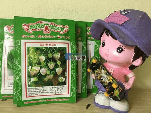 Bao bì gói hạt giống dâu tây trắng - Cửa hàng hạt giống Mỹ Đình