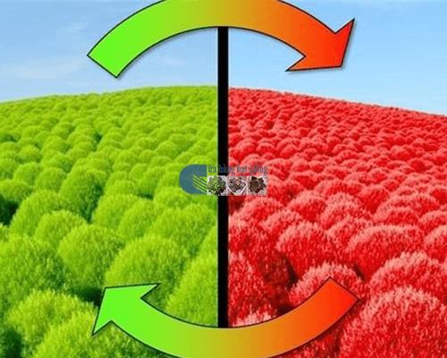 Shop hạt giống cỏ đổi màu Mỹ Đình