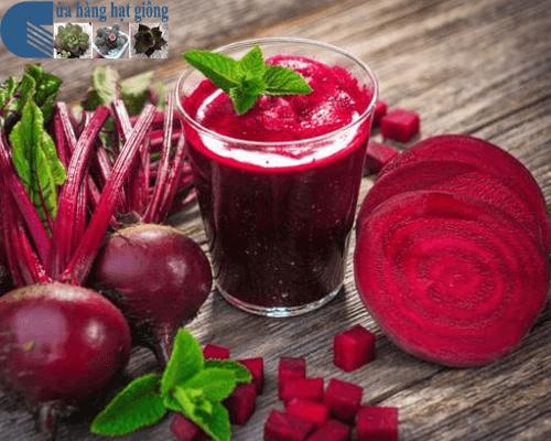 Bán hạt giống củ dền đỏ nhiều dinh dưỡng tốt cho sức khỏe