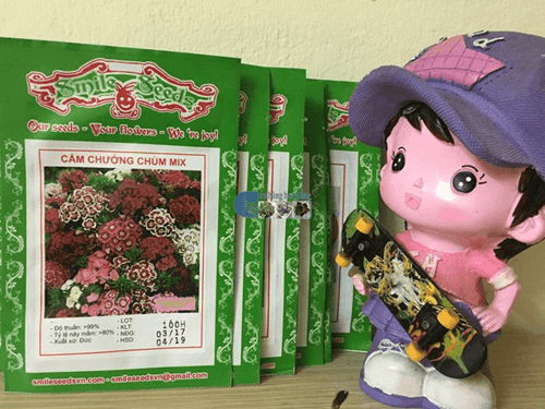 Vỏ gói hạt giống hoa cẩm chướng chùm - Cửa hàng hạt giống Mỹ Đình
