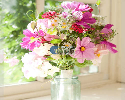 Tìm hiểu về hoa sao nhái
