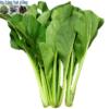 Bán hạt giống rau cải ngọt cao sản