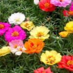 Hạt giống hoa nào dễ trồng