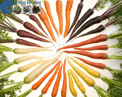 Cửa hàng bán hạt giống cà rốt nhiều màu