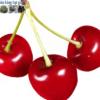 Cửa hàng bán hạt giống quả cherry anh đào