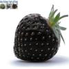 Cửa hàng bán hạt giống quả dâu tây đen bốn mùa chịu nhiệt