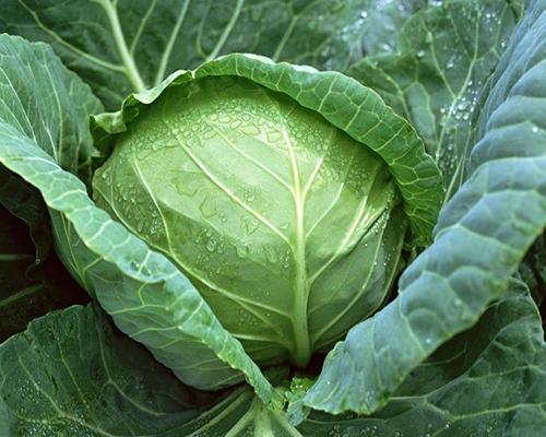 Danh sách các loại rau củ bạn nên trồng vào tháng 2