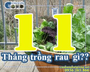 Tháng 11 trồng rau gì?