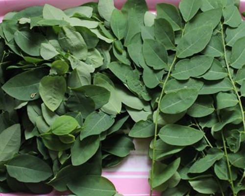 Một số gợi ý thêm cho những loại rau tháng tư