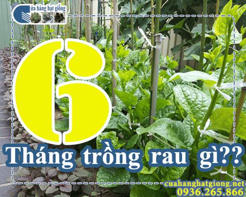 Tháng 6 trồng rau gì