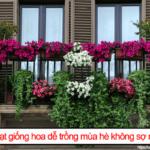 Top hạt giống hoa dễ trồng mùa hè không sợ nắng nóng